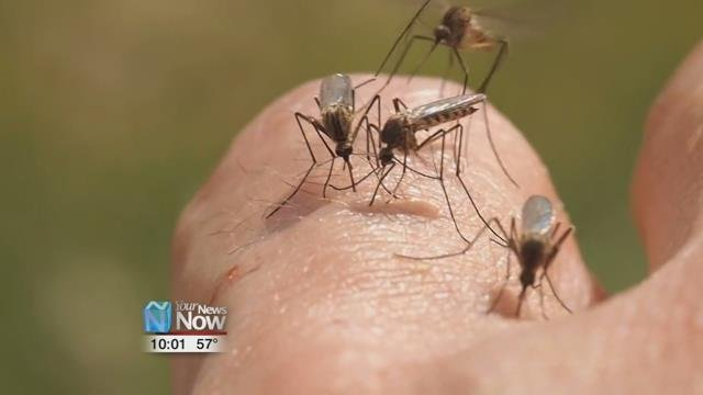 The Zika Virus is on the Rise and There are Ways to Prevent It - Hometownstations.com-WLIO- Lima, OH News Weather Sports