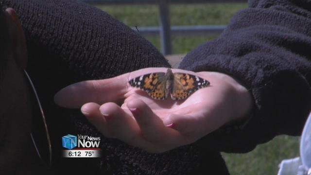 Students of the Alternative Program released butterflies Monday morning.