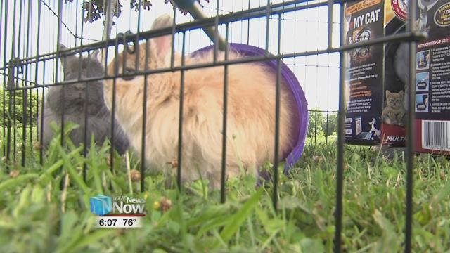 Along with garage sale items, people could also see some of the shelter pets that are available for adoption.