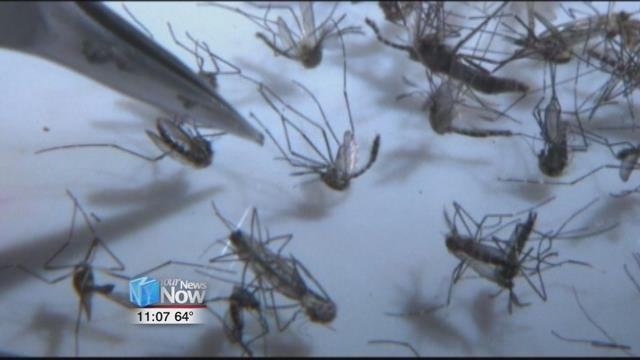 Hancock Public Health is notifying area residents that a mosquito carrying the West Nile Virus has been found near Mount Blanchard.