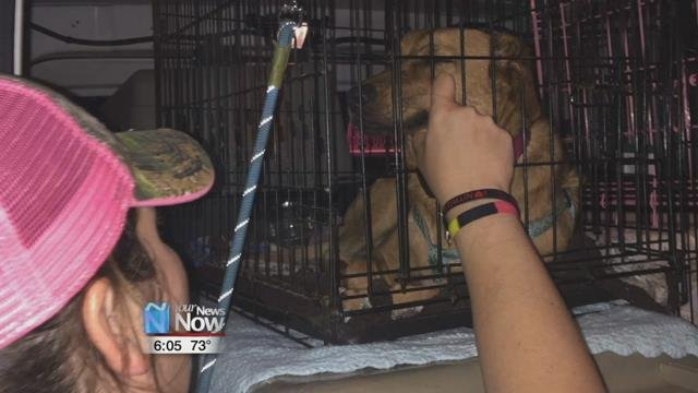 They are among 11 dogs picked up by local rescue organization Silver Linings of Ohio.