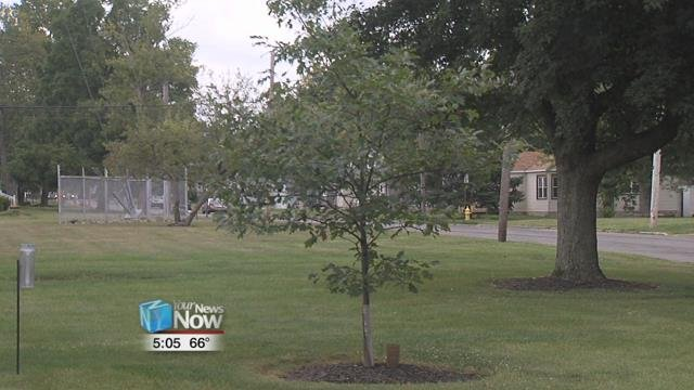 A rebate is being offered by the city's Stormwater Department and covers half the cost of a tree and having it planted by professionals.