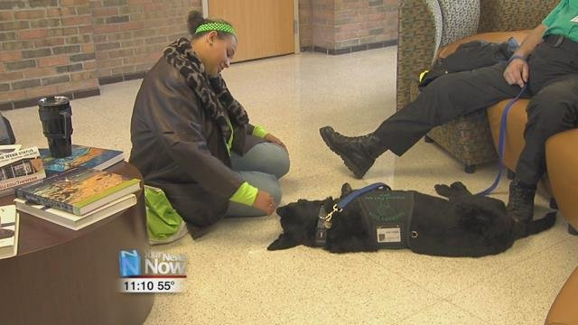 The therapy dogs from Lima Memorial Health System were on hand to help out with the stress.