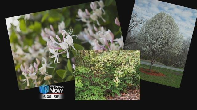 The new rules ban any of the listed species to be sold at nurseries or garden centers in the state.