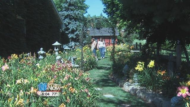 The third annual Flag City Daylily Tour takes visitors on a self-guided trip to gardens featuring daylilies.