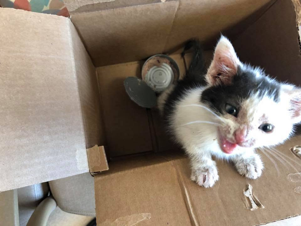 The Ohio SPCA & Humane Society has been bombarded with cats and kittens arriving at the Adoption Center in Lima.