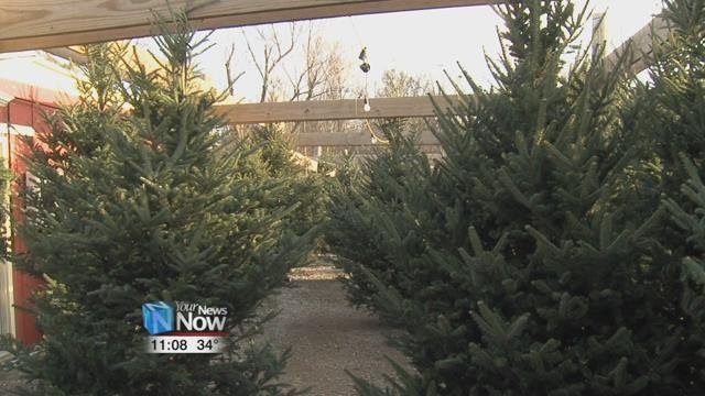 Best Time to Buy Christmas Tree is Now - Hometownstations.com-WLIO ...