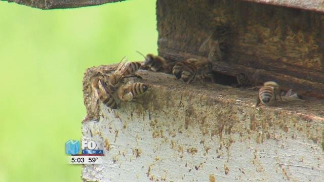 St. Marys farmer Roy Mcginnis has been interested in bees for most of his life, and says that he's lost over 30 of his hives over the winter, amajority of what he had on hand.