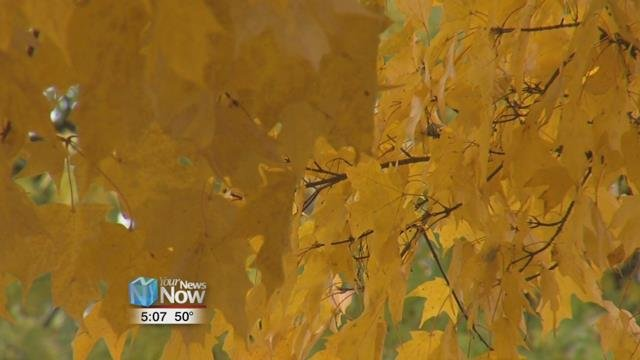 The Ohio Department of Natural Resources says that just about every part of the state is at either near peak or peak conditions for leaves.