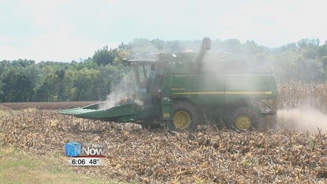 While around 70 percent of corn and 82 percent of soybeans have been harvested in Ohio,all the rain could lead to problems for the crops still in the field.